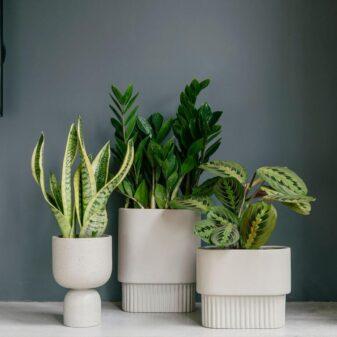 uređenje biljem